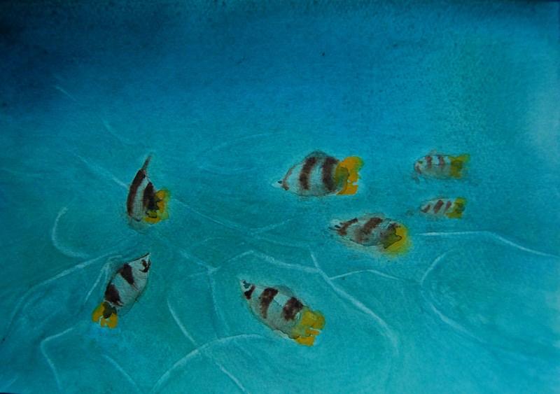 L 39 aquarium d 39 eau chaude mes poissons tom co for Poisson eau chaude aquarium